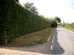 Hedge Cutting Kent